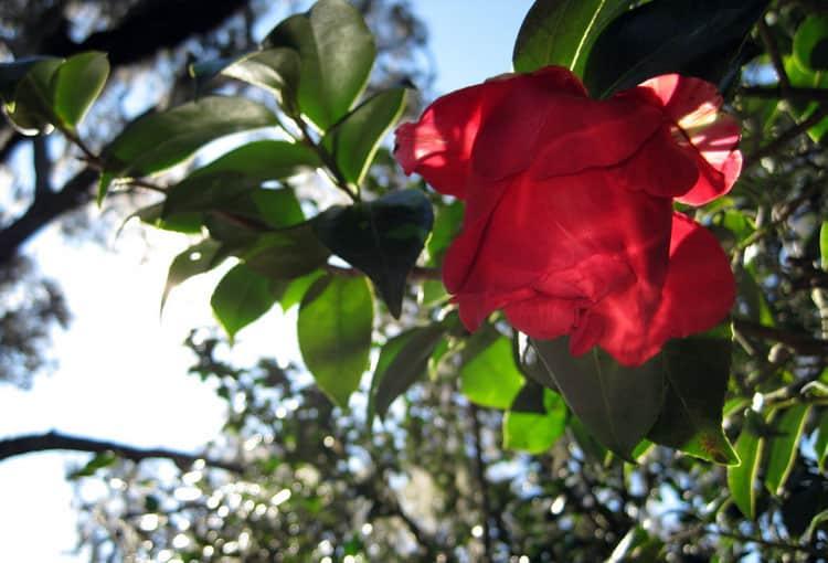 Orlando Travel Tips Nature - Harry P Leu Gardens