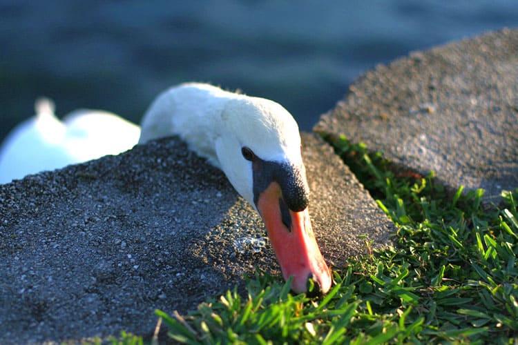 Orlando Travel Tips Nature - Lake Eola Park
