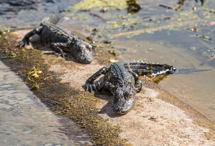 Orlando Travel Tips Nature - Orlando Wetlands Park
