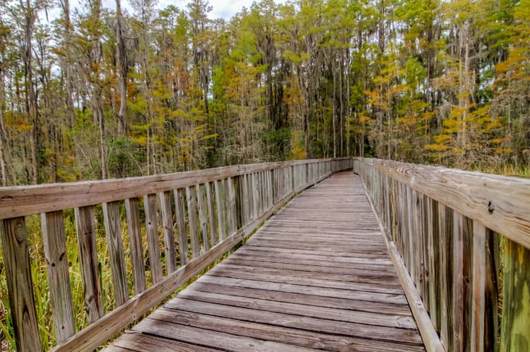 Orlando Travel Tips Nature - Tibet-Butler Nature Preserve