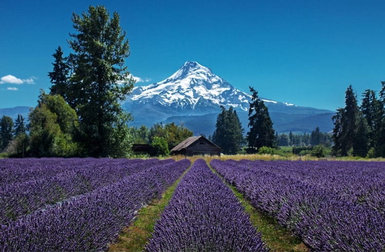 5 of America's Most Unique Lavender Farms - Lavender Valley Farm