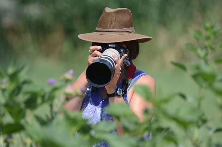 Birding in Box Elder County - Photography at Bear River Migratory Bird Refuge