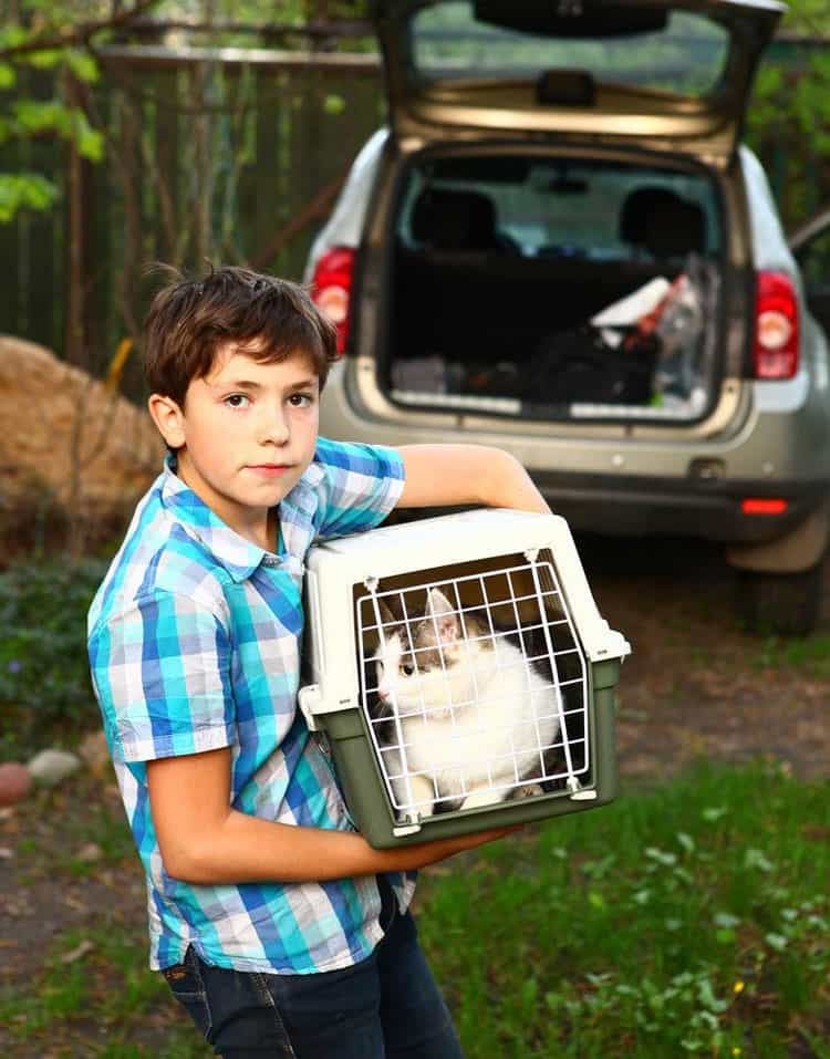 Top 5 Things to Prepare Your Cat for the Trip - Cat Carrier