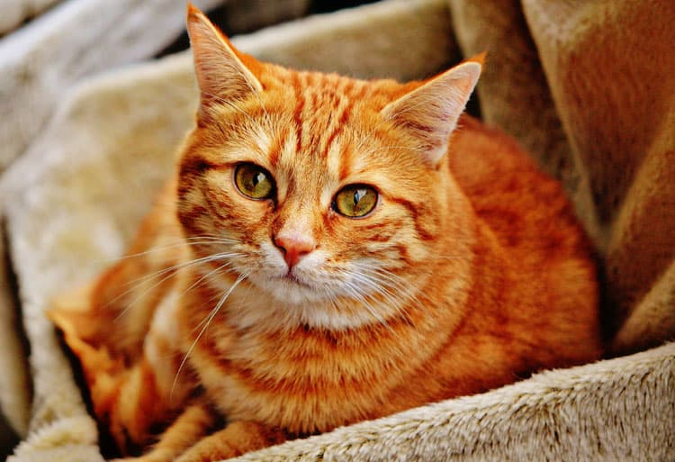 Top 5 Things to Prepare Your Cat for the Trip - Cat Bedding