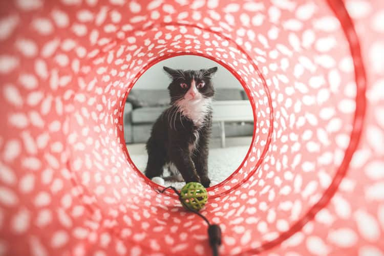 Top 5 Things to Prepare Your Cat for the Trip - Cat Toys