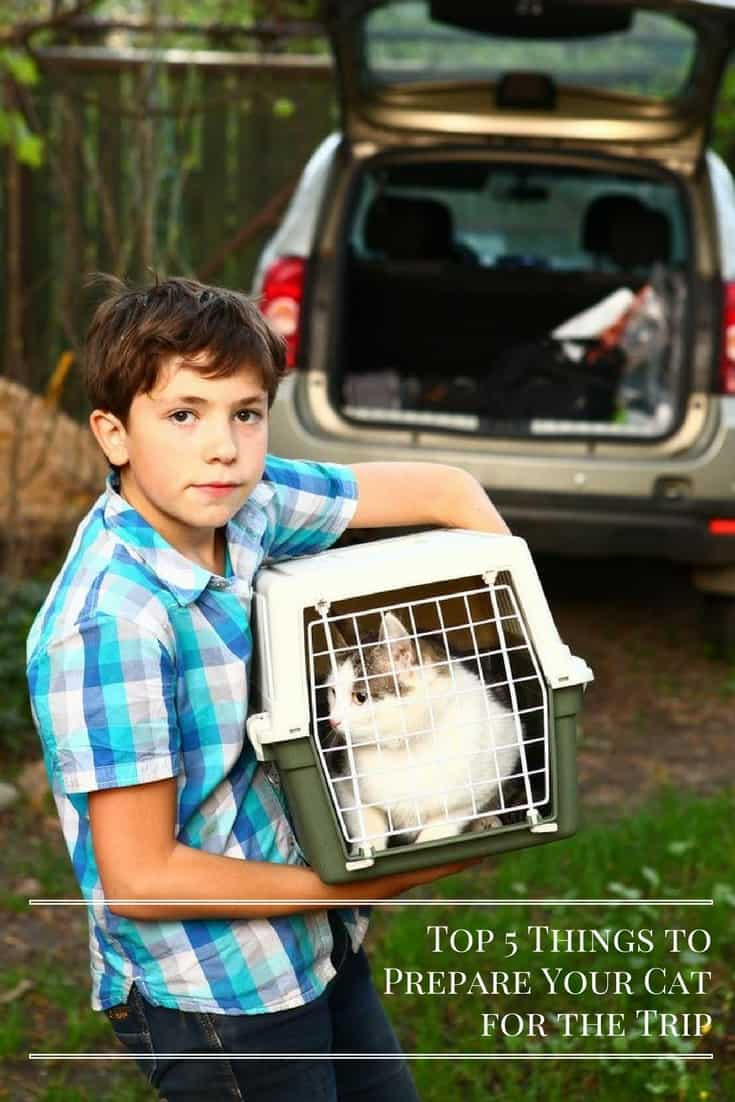 Top 5 Things to Prepare Your Cat for the Trip