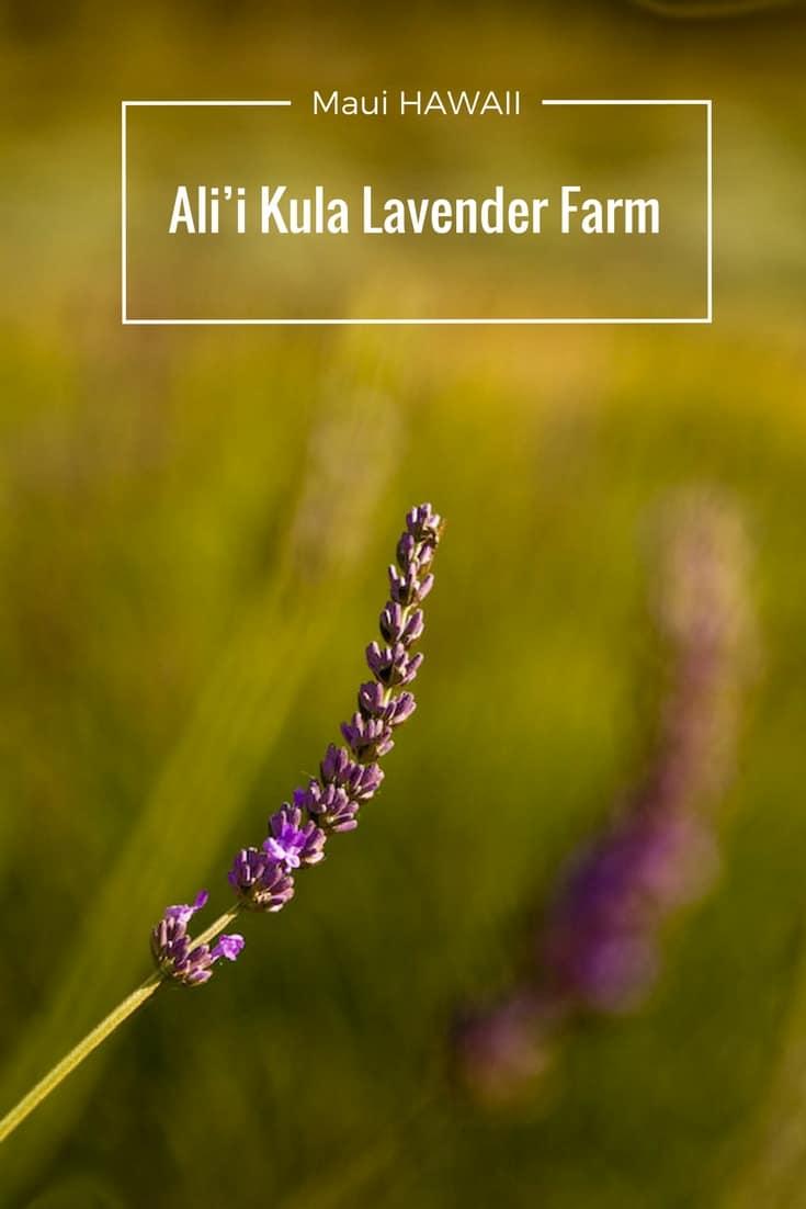 Maui - Ali'i Kula Lavender Farm