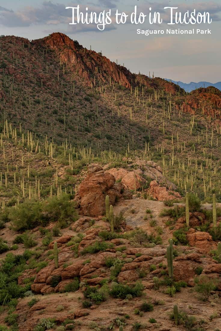 Things to do in Tucson - Saguaro National Parkm