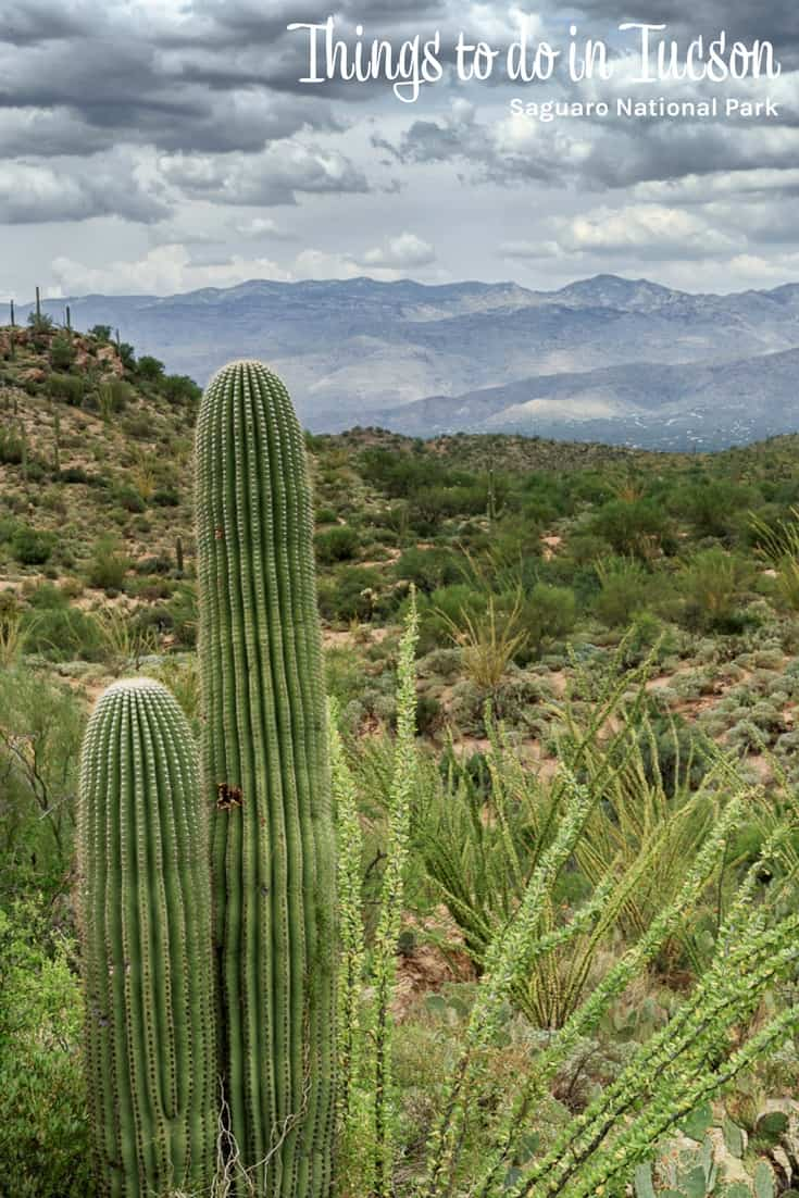 Things to do in Tucson - Saguaro National Park