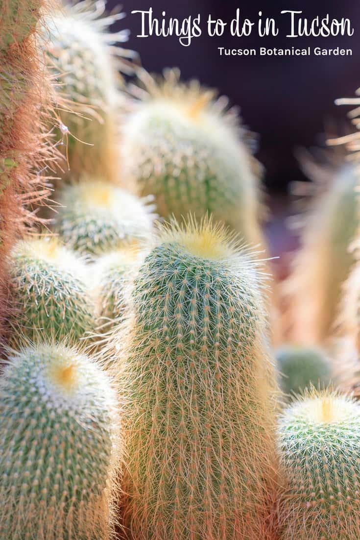 Things to do in Tucson - Tucson Botanical Garden