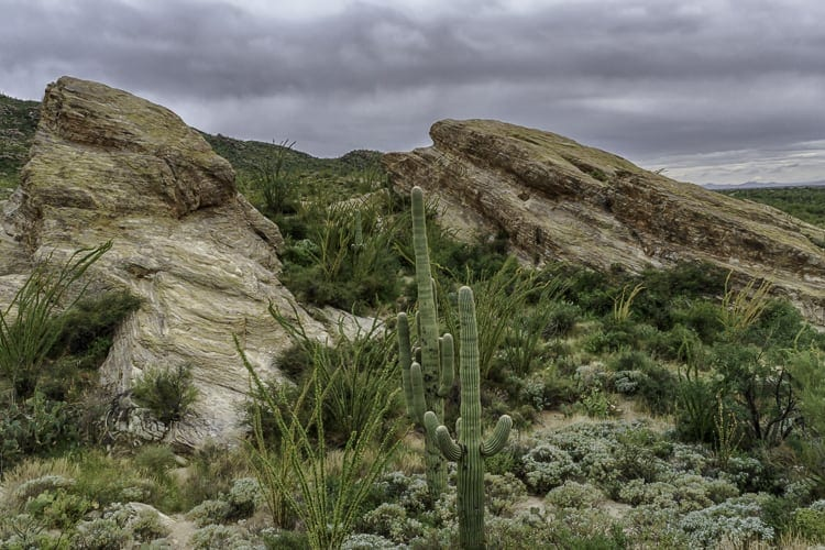 Things to do in Tuscon - Saguaro National Park