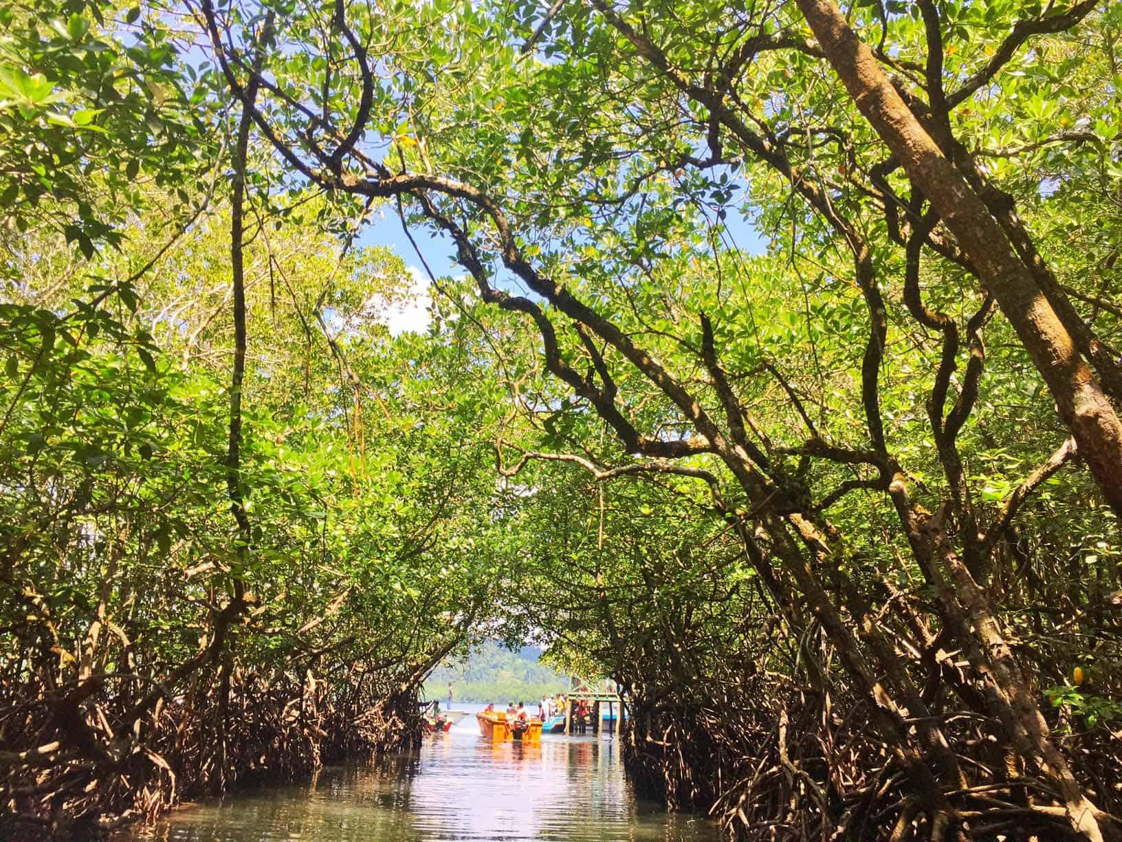 Traveler Tuesday - Divsi of Quirky Wanderer Baratang island, Andamans India