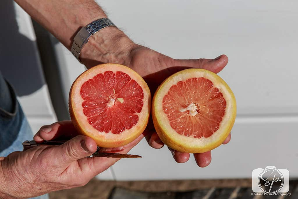 seley ranch-sliced grapefruit