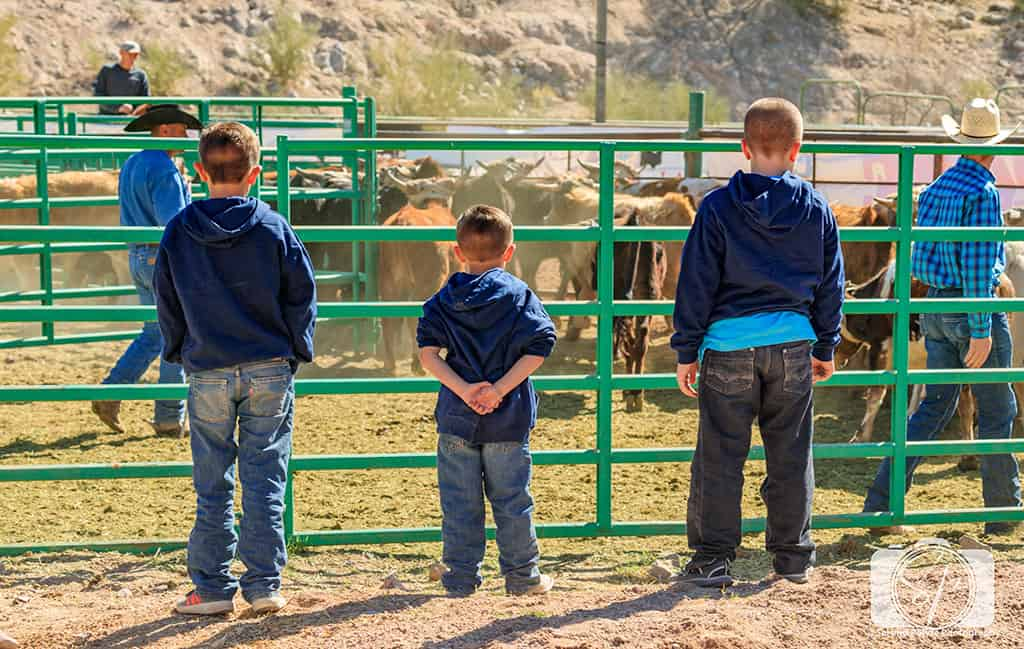 Arizona Rodeo - Wickenburg Rodeo Future Cowboys