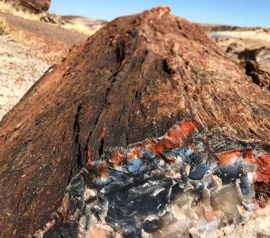 Crystal Forest Closeup - Petrified Forest National Park