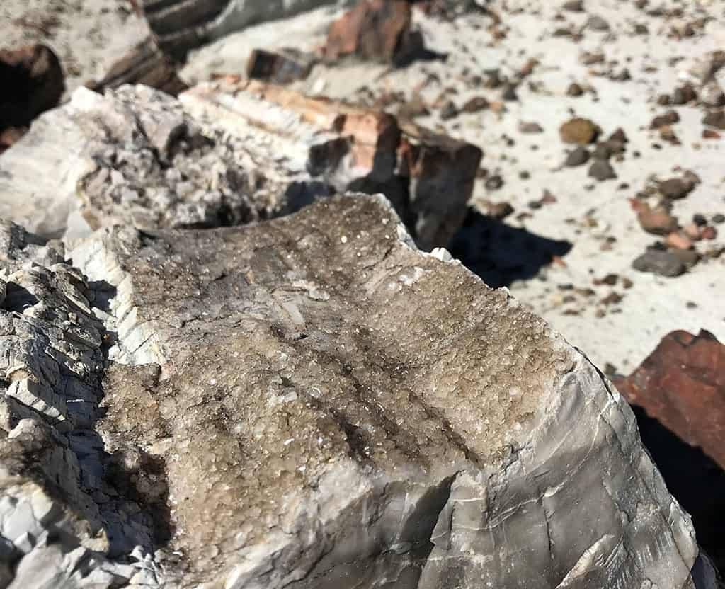 Crystals in the logs - Crystal Forest - Petrified Forest National Park