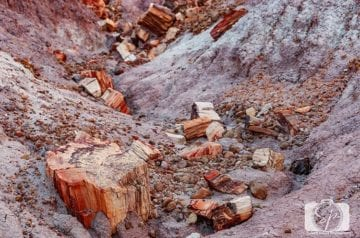 Fallen Logs along the Blue Mesa Trail - Petrified Forest National Park Featured