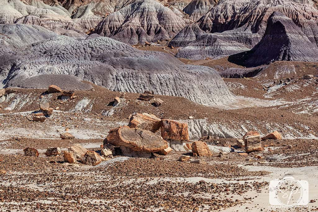 Logs and HIlls along Blue Mesa Trail - Petrified Forest National Park