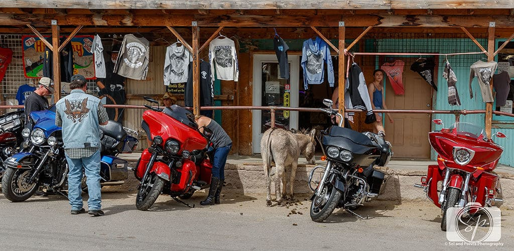 Oatman Burro Parking on Route 66 Arizona