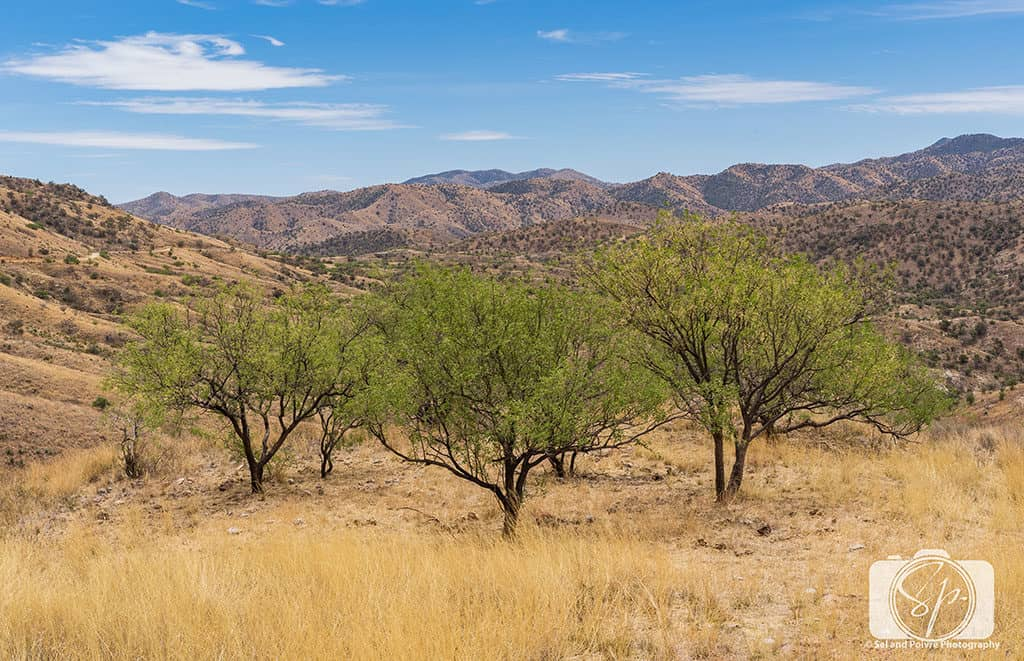 Trees and Rolling Hills along Ruby Road in Southern Arizona