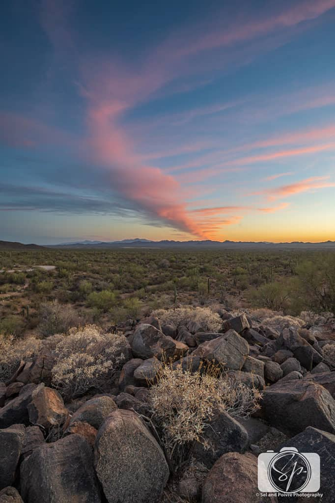 Sunset on Signal Hill at Saguaro National Park