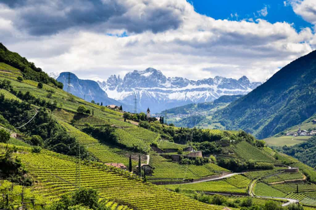 Traveler Tuesday - Kate of Our Escape Clause_South Tyrol Wine Fields