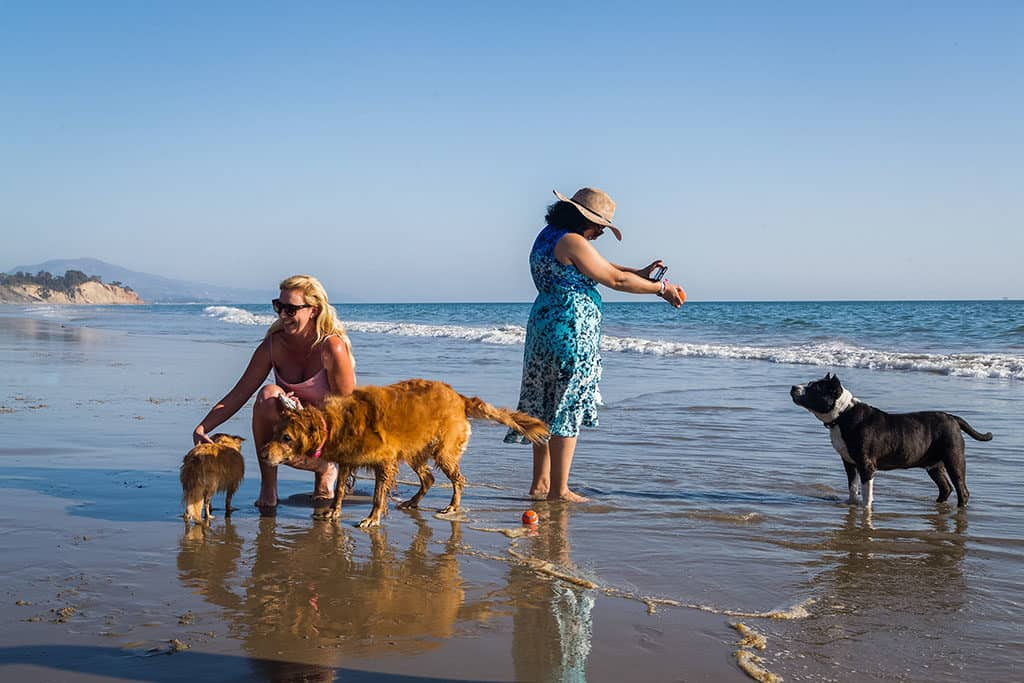 Dogs-at-Summerland-Beach_GMC-Denali-and-Dogs