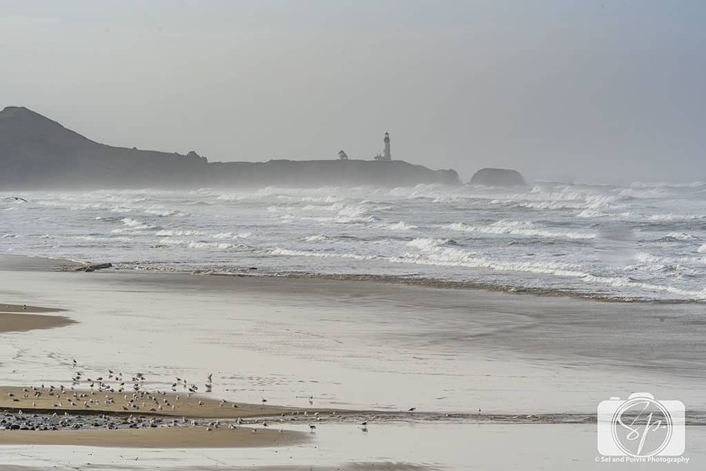 Beach near Yaquina Lighthouse Oregon-Coast-Dec-2018-24