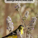 7 Things to Do in Anza-Borrego Desert State Park - Bird Watching