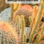 7 Things to Do in Anza-Borrego Desert State Park - Cacti2