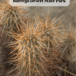 7 Things to Do in Anza-Borrego Desert State Park - Palm Canyon Trail (1)