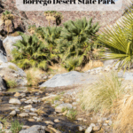 7 Things to Do in Anza-Borrego Desert State Park - Palm Canyon Trail
