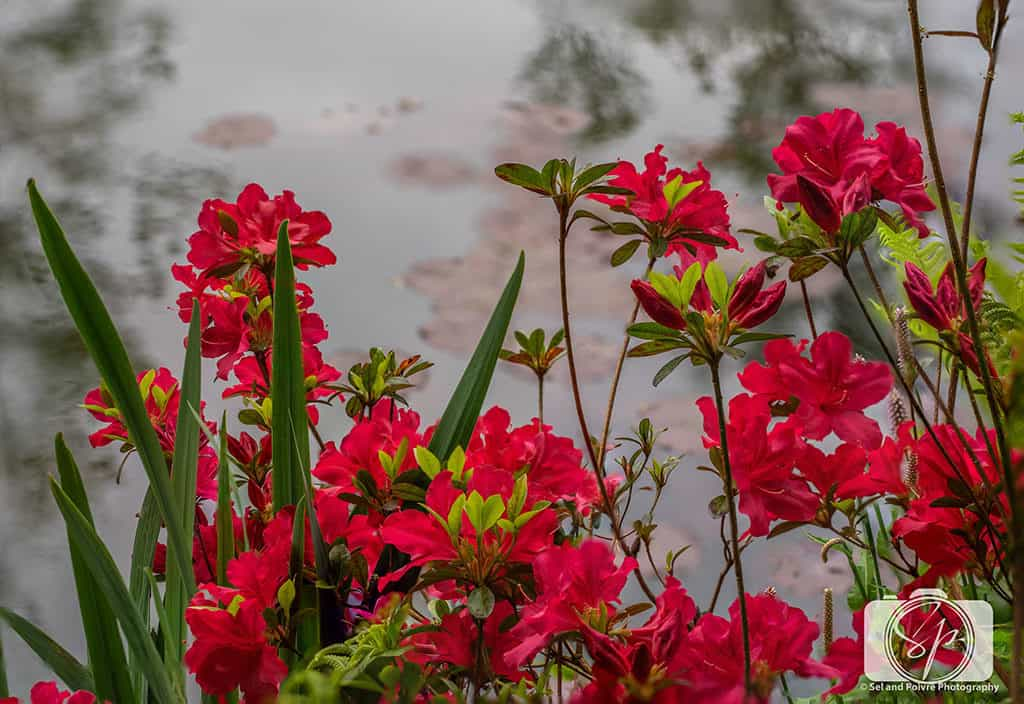 Giverny-Red Flowers near the pond