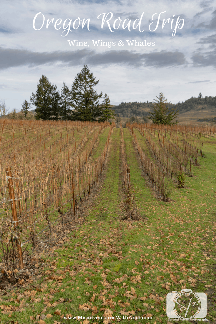 Oregon Road Trip_Wine Wings and Whales_Willamette Valley Winter Vines
