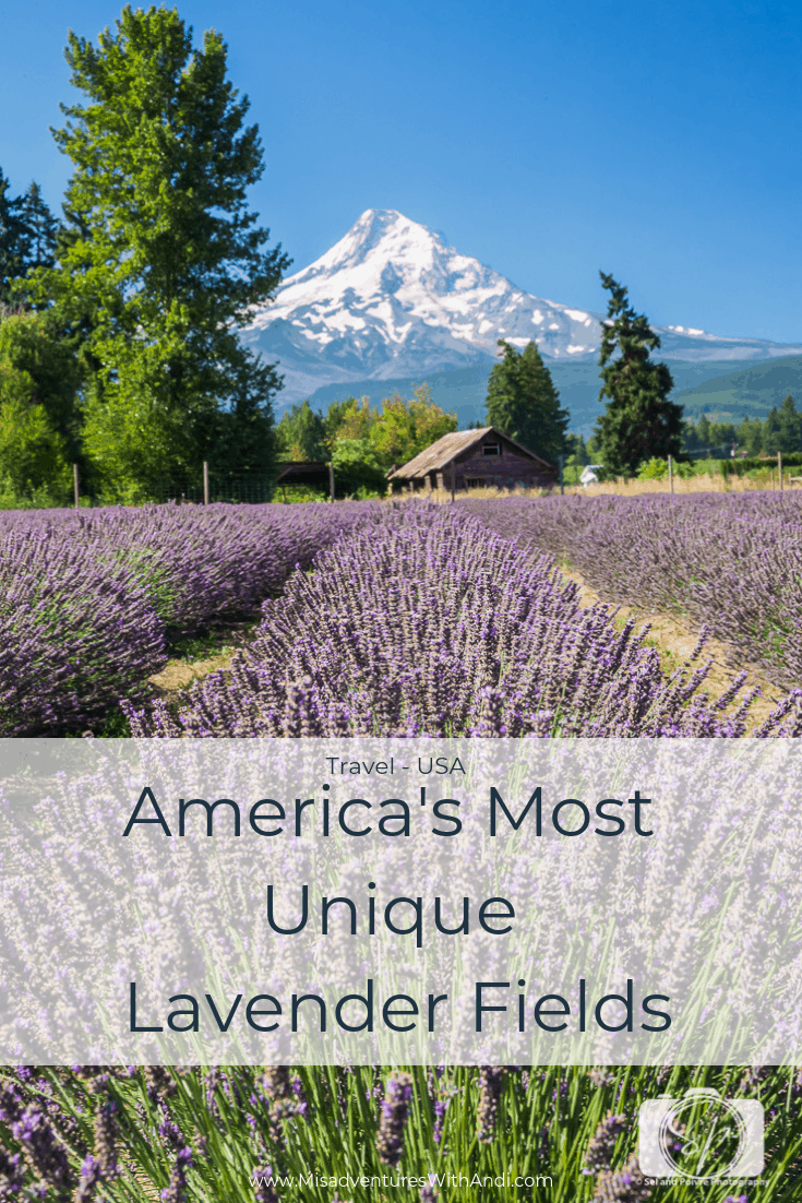 Americas Most Unique Lavender Fields