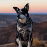 5 Reasons to Visit Kanab UTAH USA Best Friend Animal Sanctuary