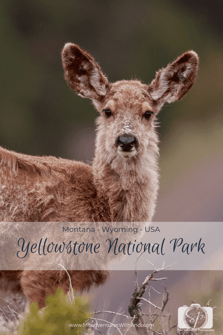 Yellowstone National Park Photography and Wildlife