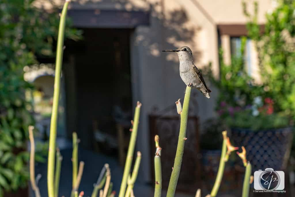 Bird Life at the Hacienda del Sol in Tucson Arizona