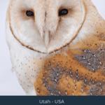 Birding in Box Elder County – Adventures in Birding at Bear River Migratory Bird Refuge
