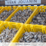 Cancale France – Brittanys Oyster Capital