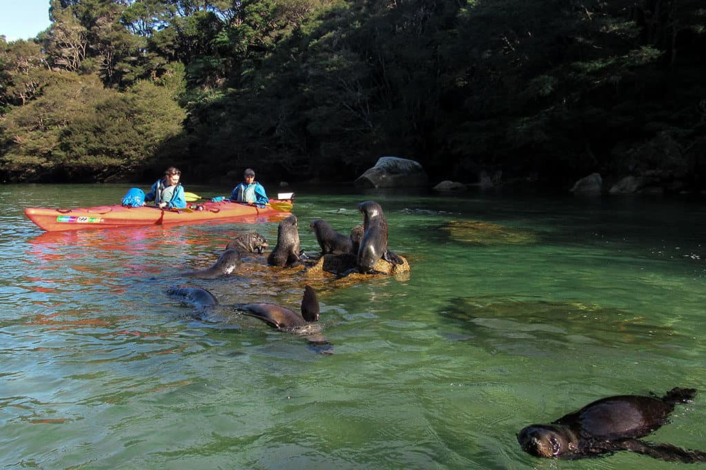 Traveler Tuesday - Mikaela of Voyageur Tripper_South Island Kayaking Seals Voyageur Tripper