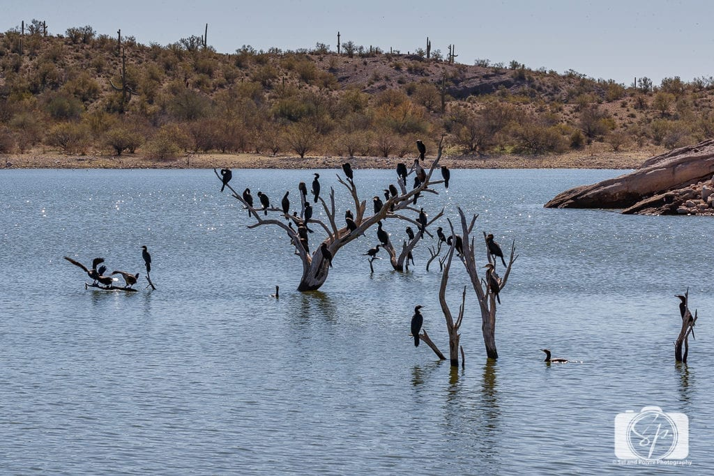 The 50 Best Day Trips from Phoenix - Birds on Lake Pleasant Regional Park