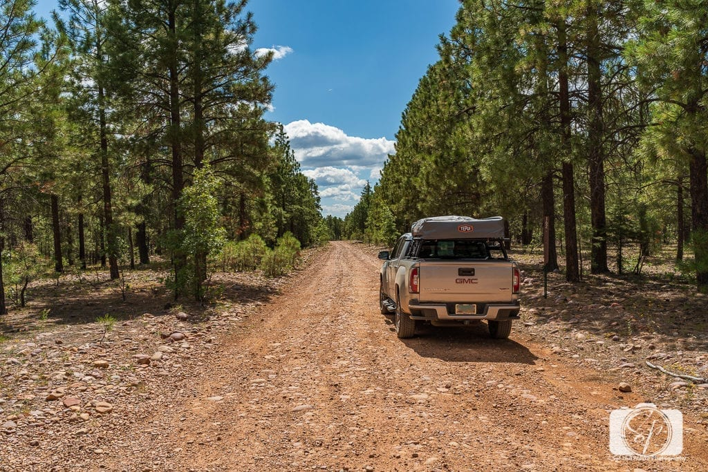 The 50 Best Day Trips from Phoenix - Coconino National Forest Arizona