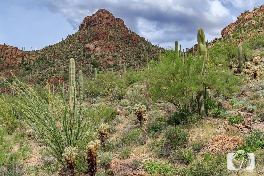 The 50 Best Day Trips from Phoenix - Sonoran Desert in Arizona