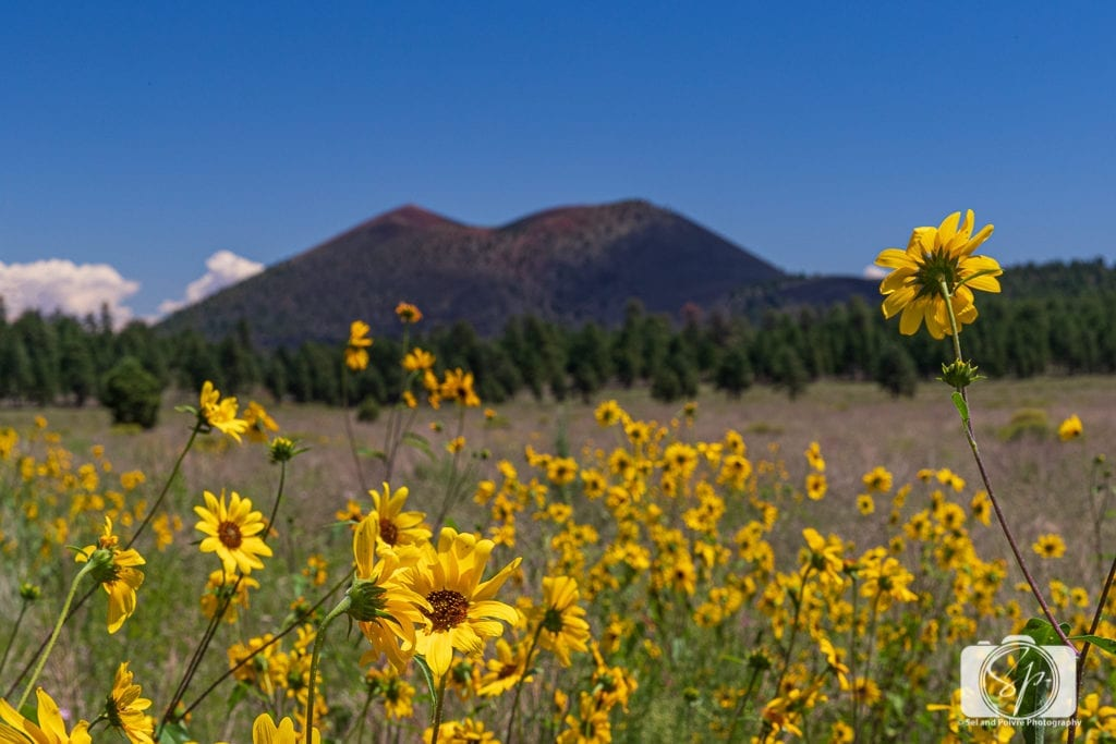 The 50 Best Day Trips from Phoenix - Sunset Crater National Monument Arizona