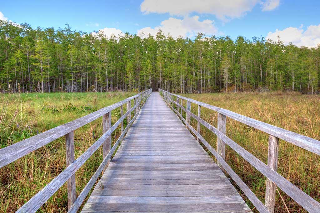 Audubon-Corkscrew-Swamp-Sanctuary-near-Fort-Myers-Florida-USA