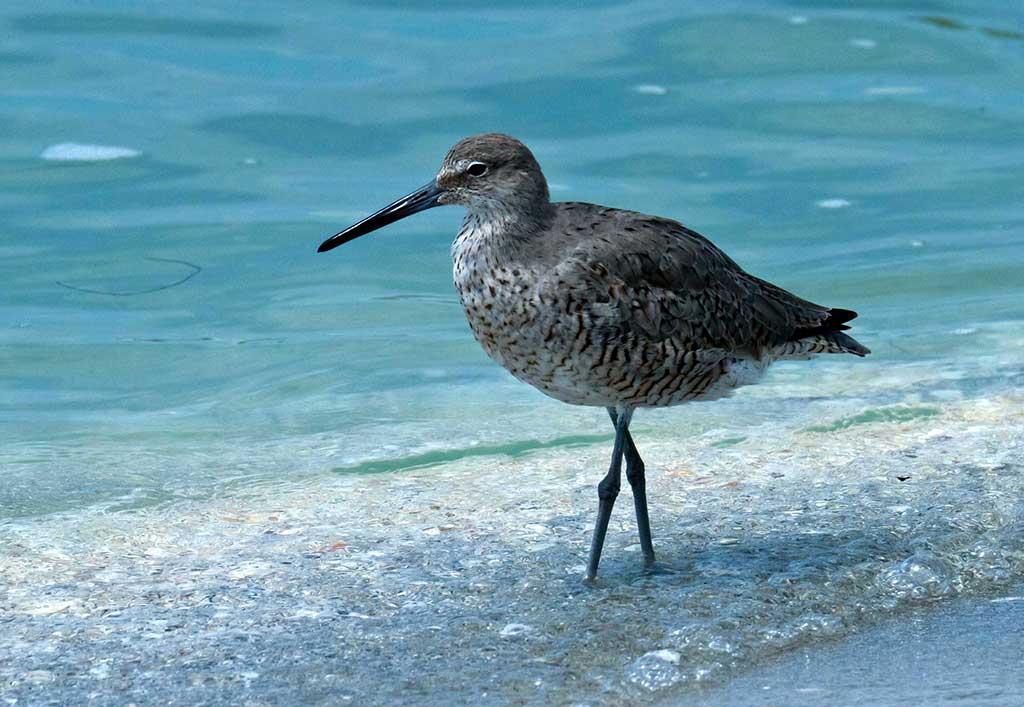 Sanibel-Island-near-Fort-Myers-Florida-USA