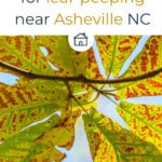 Mountain Cabin for leaf peeping near Asheville