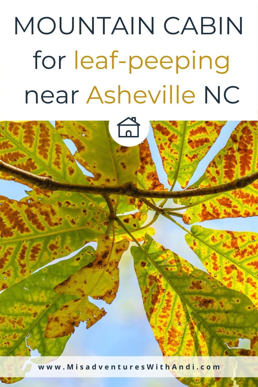 Mountain Cabin for leaf-peeping near Asheville