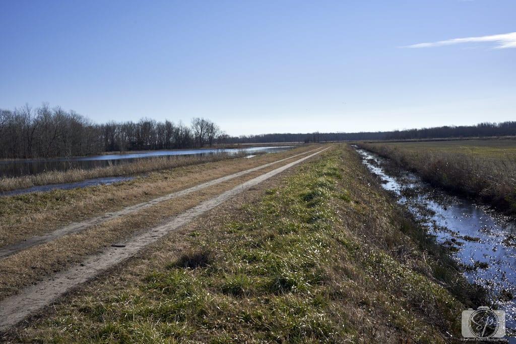 Road in Pungo Unit of Pocosin Lakes National Wildlife Refuge